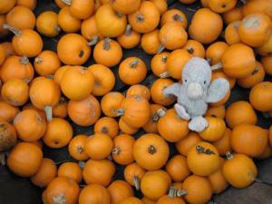 duckyPumpkins